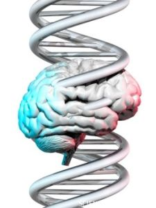 Schizophrenia, Autism Linked to Several of the Same Genes